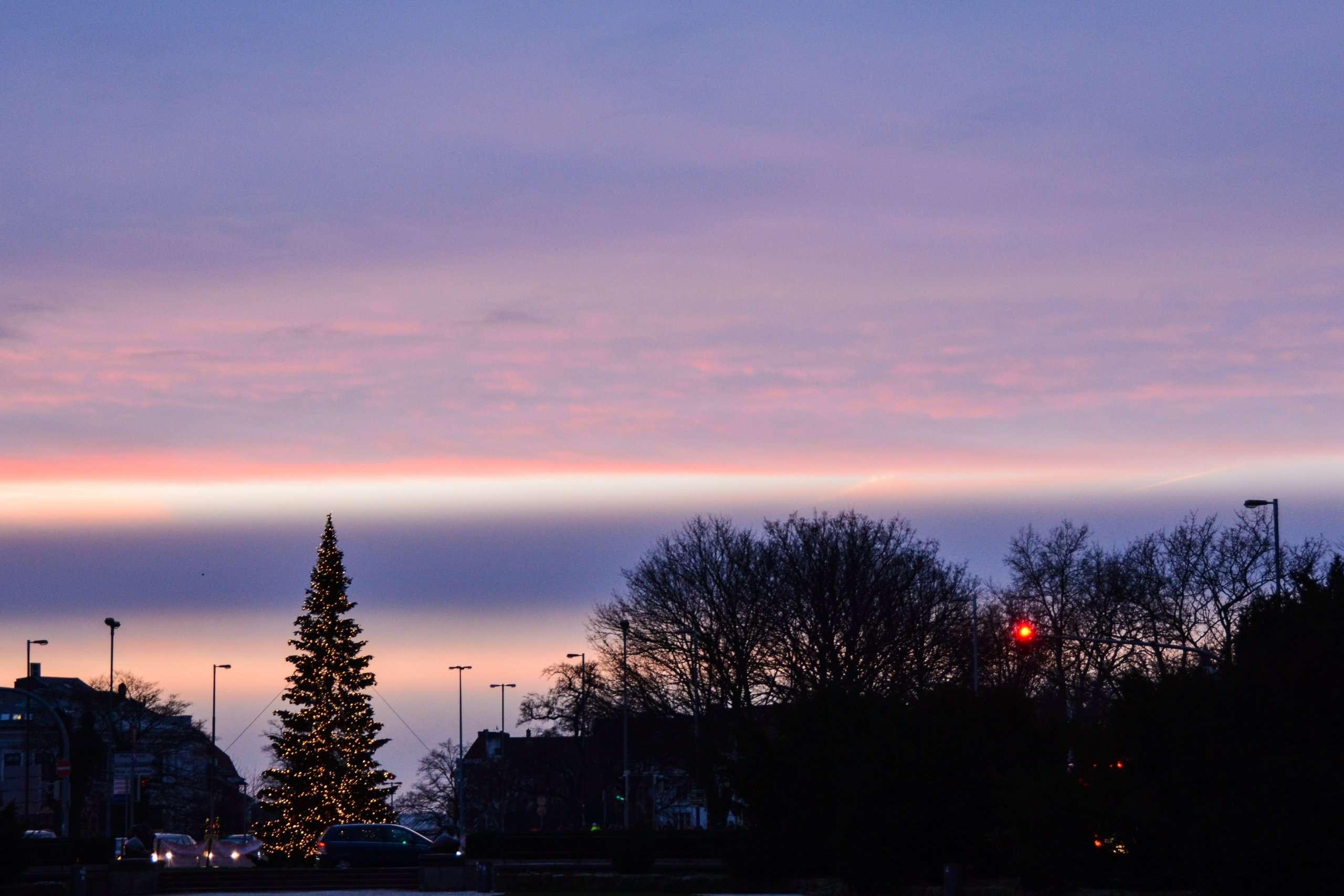 Contemplative Photography, Christmas tree