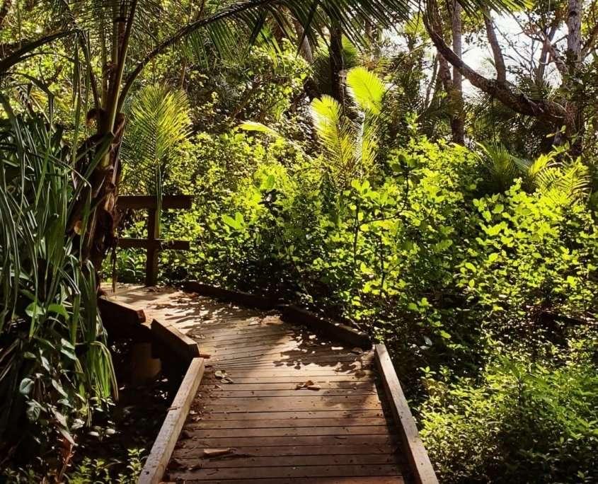 rainforest walk, creative writers retreat Australia